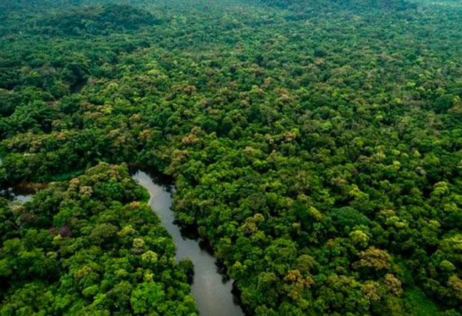 Deforestación en la Amazonía